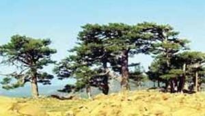 Karaçam ormanı Dünya Mirası Listesi'ne