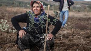 CHP, Yırcaya bin zeytin fidanı dikilecek
