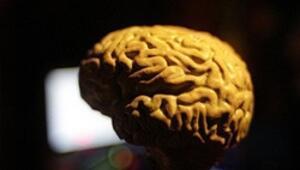 İnsan beyni 45inde çöküş dönemine giriyor