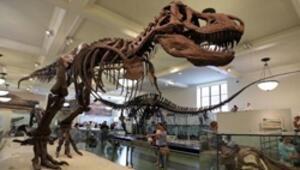 New Yorktaki Amerikan Doğa Tarihi Müzesinde yatıya kalınabiliyor