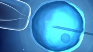 Kısırlık tedavisinde kök hücre umudu