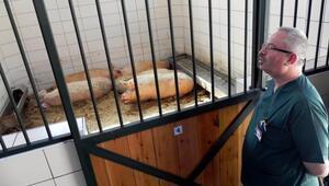 Diploma için domuz yetiştirme şartı