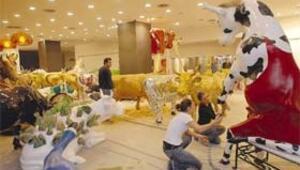 İstanbul'un ineklerinden 77'si bugün 5 bin liradan açık artırmaya çıkıyor