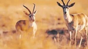 Türkiye'de 42 bitki ve hayvan türü tehlikede