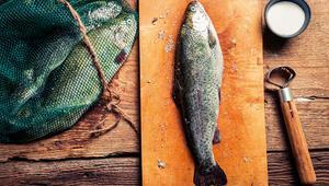 Kültürlü balık mı, kültürsüz balık mı