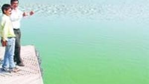 Eymir'de susuzluk balıkları öldürüyor