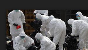 Almanyada yeniden kuş gribi virüsüne rastlandı