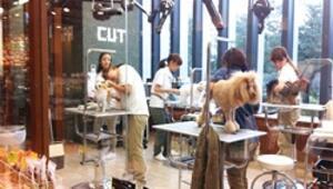 Japonya'da köpek olmak