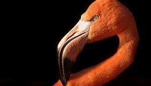 Bir çevre aktivistinin medyadaki çileli yaşamı: Kurdun kuşun hakkını 'kurtlar sofrası'nda  nasıl aradım