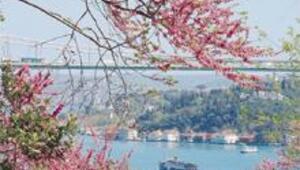Erik ağacıyla dostluk eden antik eserler, rengarenk çiçeğe kesmiş vadiler