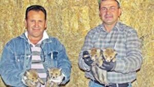 Tilki yavrularına doğasever koruması