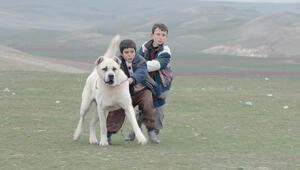 Türk sinemasının yenileri festivalde
