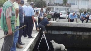 Kocaelide vatandaşlar köpek için seferber oldu