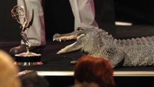 Sahnede bir timsah