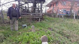 Annesinin mezarının evinin bahçesinden kaldırılmasını istiyor