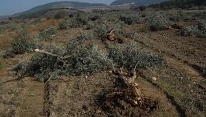 Greenpeace, Yırca Köyünün hava kirliliğini ölçtü