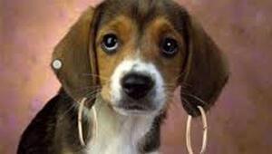New Yorkta evcil hayvanlara kozmetik yasak