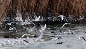 Kuşlar donan Mogan ve Eymir'de aç kaldı