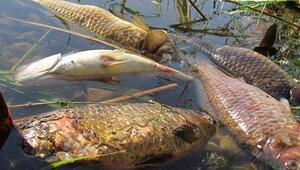 Toplu balık ölümü