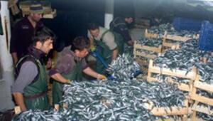 Balık fiyatları ucuzlayacak