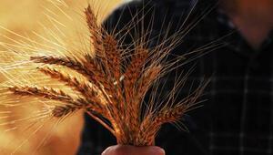 Tarım ürünleri ithalatındaki artış rekolte kayıplarından