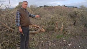 Yırcada katledilen 6 bin 666 ağacı koruma görevi köylüye
