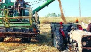 Acil eylem planı şart  yoksa buğdaysız kalırız