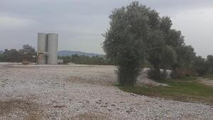 Aydında jeotermal enerji için zeytin ağaçları kesildi