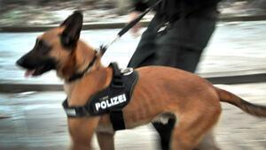Polis köpeği; anneyi ısırdı, oğlunu yaraladı