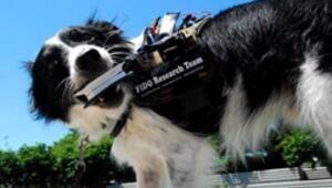 FIDO ile köpeklerle iletişim kurmak kolaylaşacak