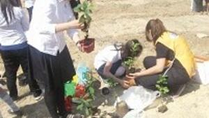 3 günlük festival uğruna 300 ağacı kurban ettiler