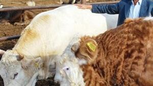 Et fiyatındaki artışın besiciye faydası yok