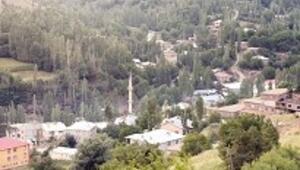 Dağlar arasındaki ceviz bahçesi