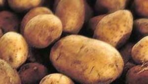 Patateste bile radyasyon var