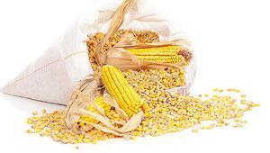 TMO zamanında fiyat açıklamadı tüccarlar mısırı ucuza topladı çiftçi mağdur oldu