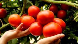 Sebze ihracatı ile ilgili önemli uyarı