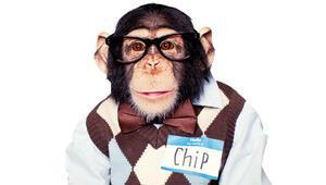 Şempanzelerin emekliliği geldi