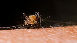 Sağlık Bakanlığından zika virüsü açıklaması