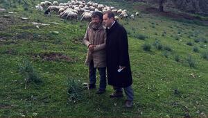 Çobandan özür dileyen vekil sözünü tuttu koyunları otlattı
