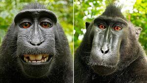 Makak maymunu Narutonun çektiği selfielerle ilgili karar çıktı