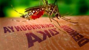 Zika virüsü can almaya devam ediyor Zika virüsü Türkiye'de görülebilir mi