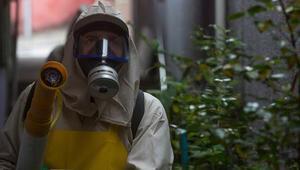 Almanyada Zika virüsü alarmı