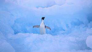 150 bin penguentelef oldu