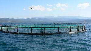 Artan fiyatlar tüketiciyi çiftlik balığına yöneltti