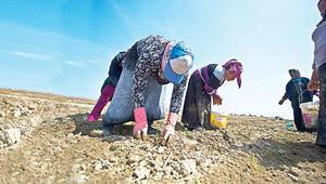 İşgücüne katılım ve istihdam oranında göçmen işçiler Türkleri geçti