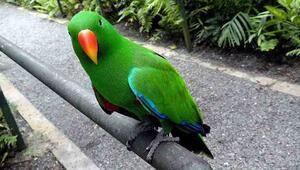 Sevimli ve öfkeli: Papağan