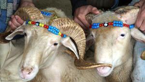 Çiftçiye koyun ve keçi desteği