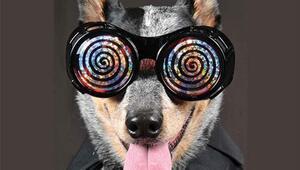 Hayvanları hipnotize edebilir misiniz
