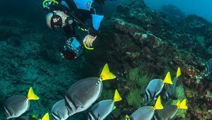 Sualtı sürpriz dolu / Galapagosta dalış