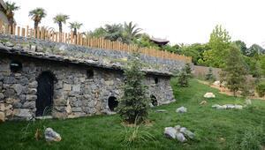 Darıca'ya Türkiye'nin ilk çizgili sırtlanı getirildi